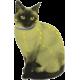 Naturligt loppe- og flåthalsbånd til kat